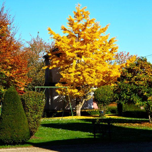 carre-home_jardin